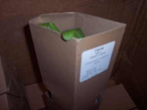 Some of the potted plants also arrived in these cardboard holders.