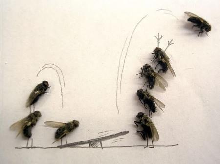 dead-fly-art-circus